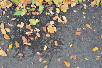 Leaves on the asphalt