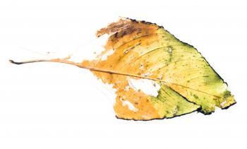 Lifeless Leaf