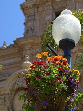 Light pole and flowers