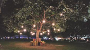 Lights Hanging on Green Leaf Tree