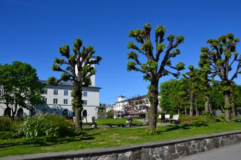 Linden trees in Sandvika