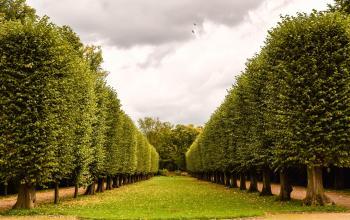 Lined Tree Avenue