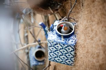 little bird on birdhouse teapot