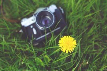 Little yellow flower and old camera