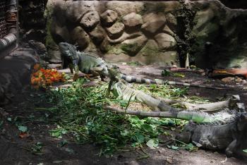 Lizards at Surabaya Zoo