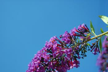 Long Flower