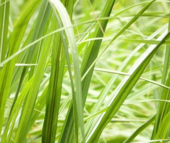 Long Grass Background