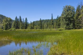 Lost Lake, Linn County, Oregon, Summer Grass