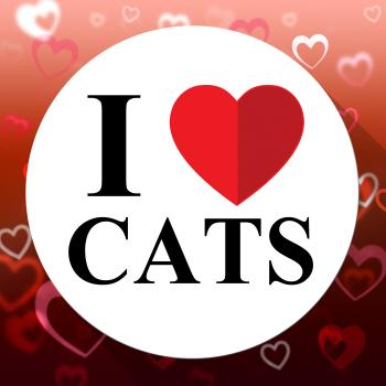 Love Cats Indicates Domestic Fabulous And Like Cat