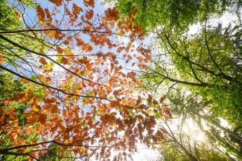 Low Angle Photo of Maple Leaves