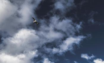 Low Angle Photography of Grey Flying Bird