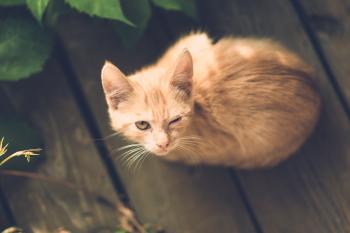 Loyal Cat