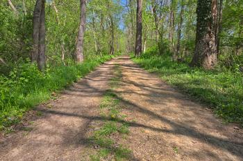 Lush Spring Trail - HDR