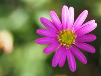 Macro Photography of a Pink Flower