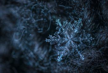 Macro Photography of Snowflake