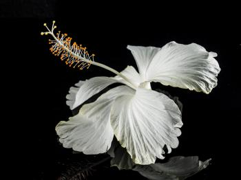 Macro Photography of White Flower