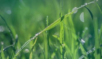 Macro Shot of Green Grass