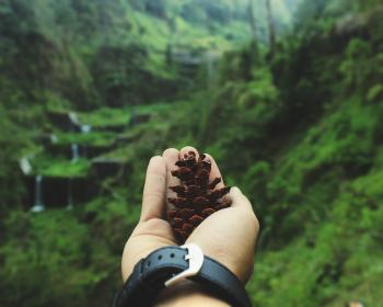 Macro Shot of Person Holding Pinecone
