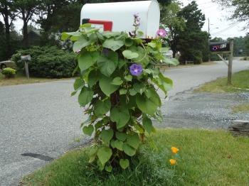 Mailbox with Vines Flowers