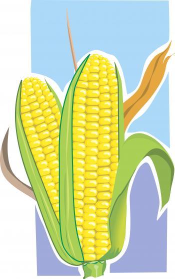Maize Illustration