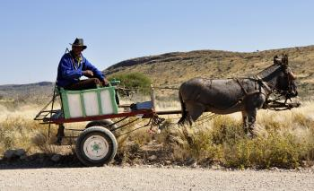 Man Riding on Carriage Pulled by Donkey Under Blue Sky during Daytime