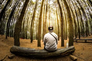 Man Siting on Log in Center of Forest Panoramic Photo