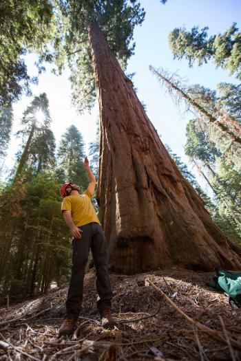 Sequoia Big Foot