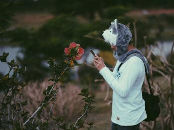 Man Wearing Grey Wolf Critter Cap Taking a Photo of Pink Hibiscus Flower