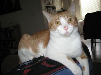 Marie's cat Oliver