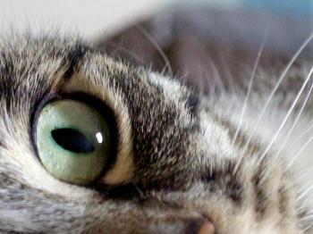 Maxx Cat
