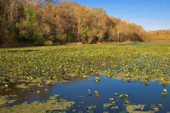 McKee-Beshers Marsh