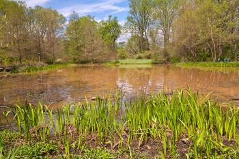 Meadowlark Gardens Marsh - HDR