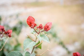 Mexican Flora
