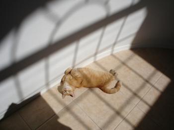 Midday Catnap