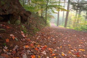 Misty Autumn Trail - HDR