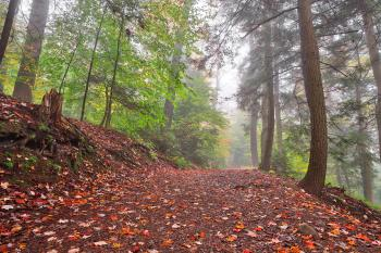 Misty Autumn Trail - Ricketts Glen HDR