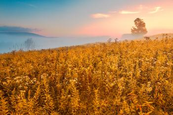 Misty Canaan Valley Sunrise - Gold Pastel Fantasy HDR