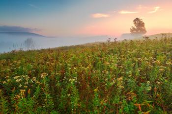 Misty Canaan Valley Sunrise - HDR