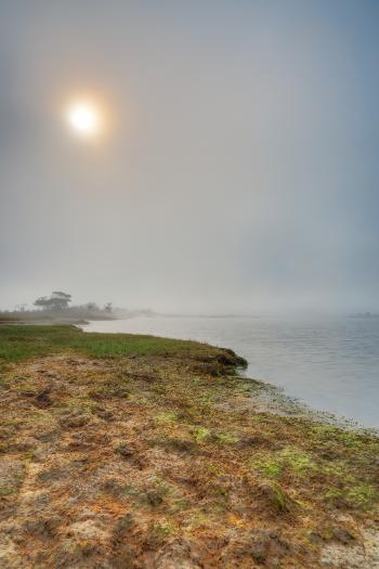 Misty Sun Kissed Marsh - HDR