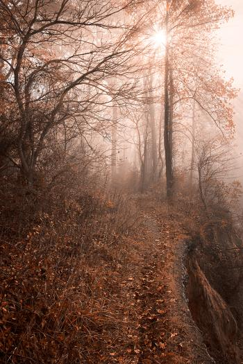 Misty Sun Kissed Trail - HDR