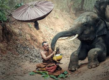 Monk with an Elephant