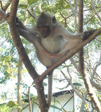 Monkey doing the splits