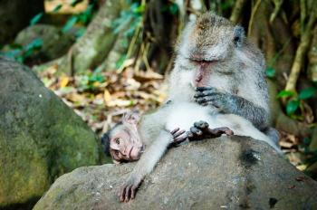 Monkey mother and baby