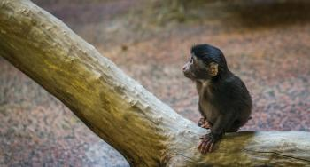 Monkey on Brown Tree Branch