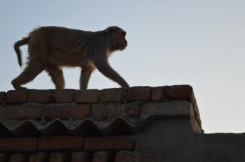 Monkey Prowling