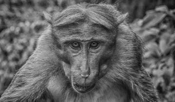 Monkey's Eye