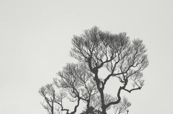Monochrome Photography of Bare Tree