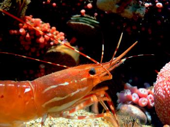 Monterey Aquarium. (35)