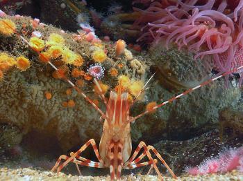 Monterey Aquarium. (51)