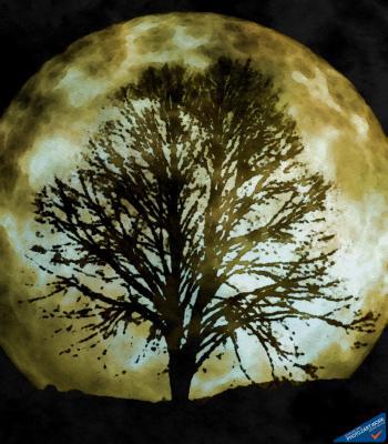 Moon - ID: 16236-104957-3195